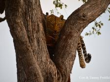 Cort & Tammy Frohlich Leopard Kill