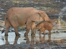 car-forest-elephants-cynthia-walpole