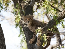 cheetah-cub-south-africa