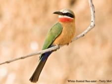 fitmcgrew_selous_bird-must-credit-terry