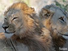 susan-peter_lion-brothers-2