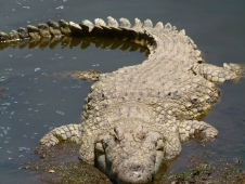 ER '11 - Mara croc