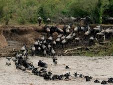 kenya migration2