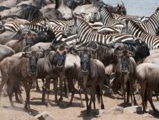 kenya migration3