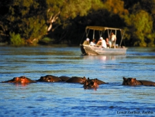 lower-zambezi-river-hippos