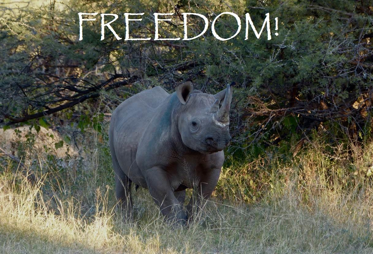 Rhino Freedom Photo 2 (2)