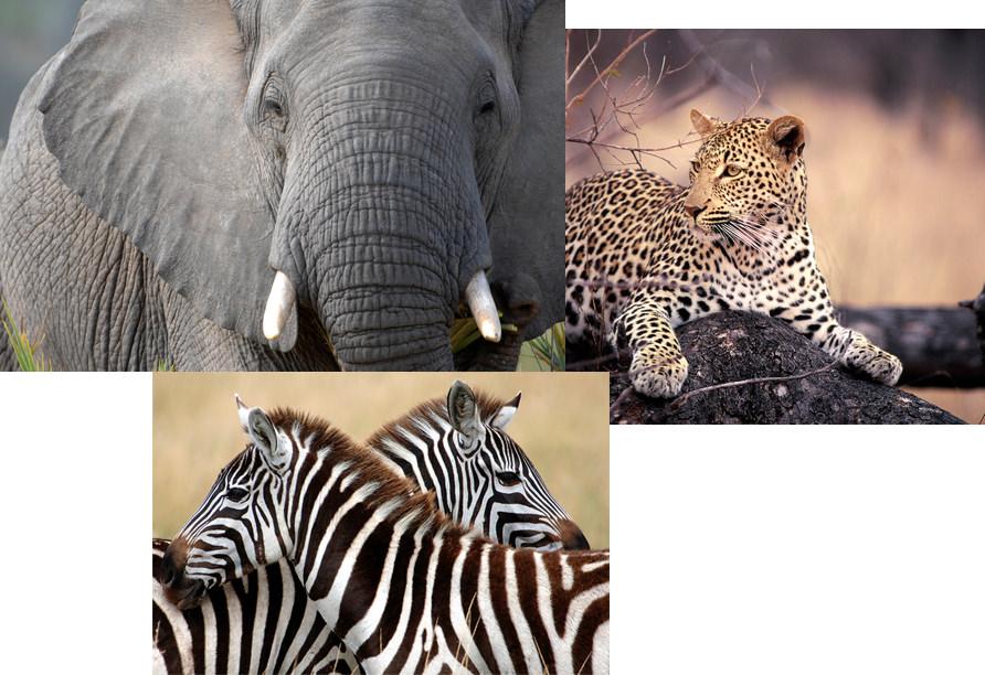 Elephants, Jaguars, and Zebras abound at Sabi Sands Reserve